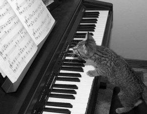 Un joli petit chat déchiffre une partition de piano
